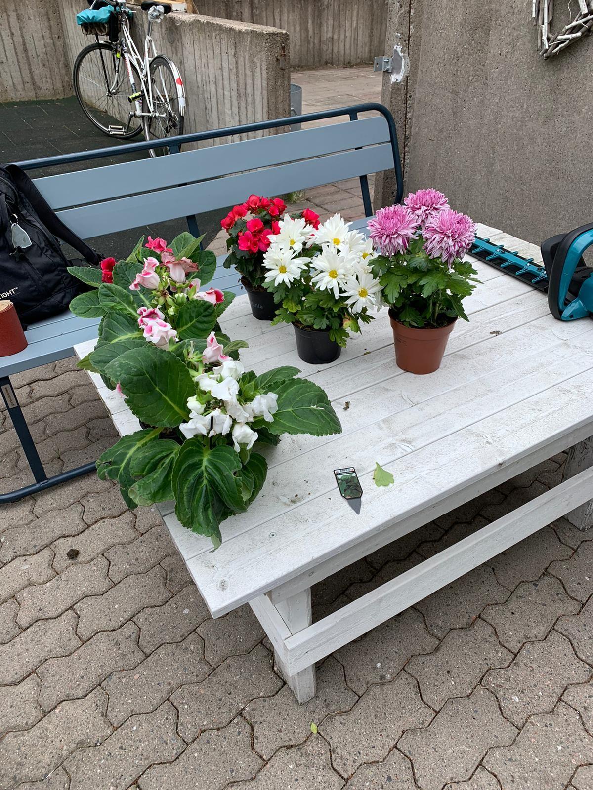 Valkoinen puinen pihapöytä, jonka päällä on kuusi kukkaruukkua.