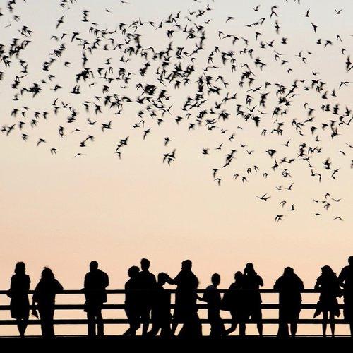 austin-bats-3.jpg