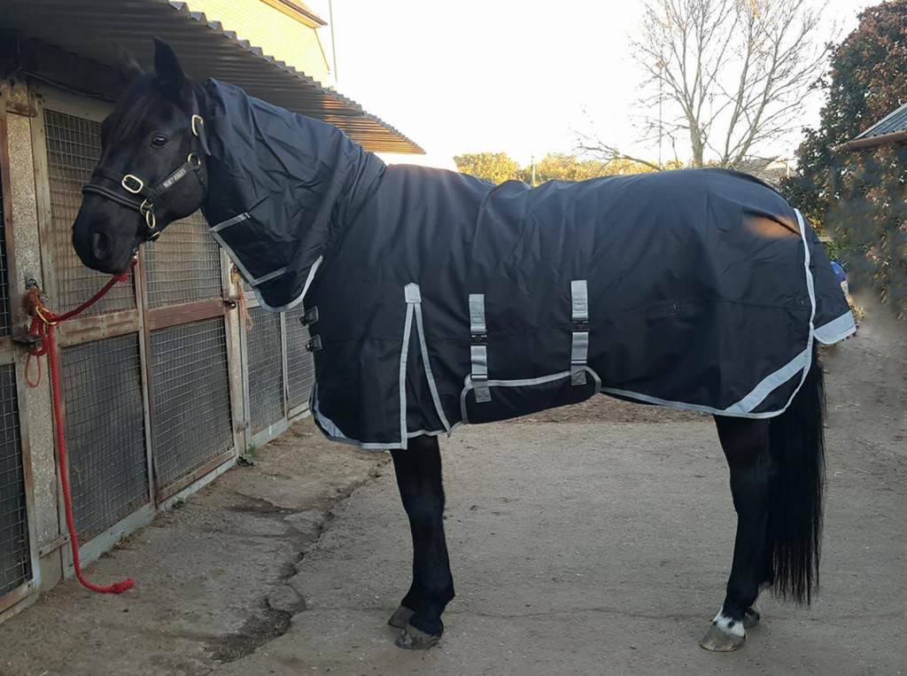 Rudy wearing Derby House All in One Turnout Rug