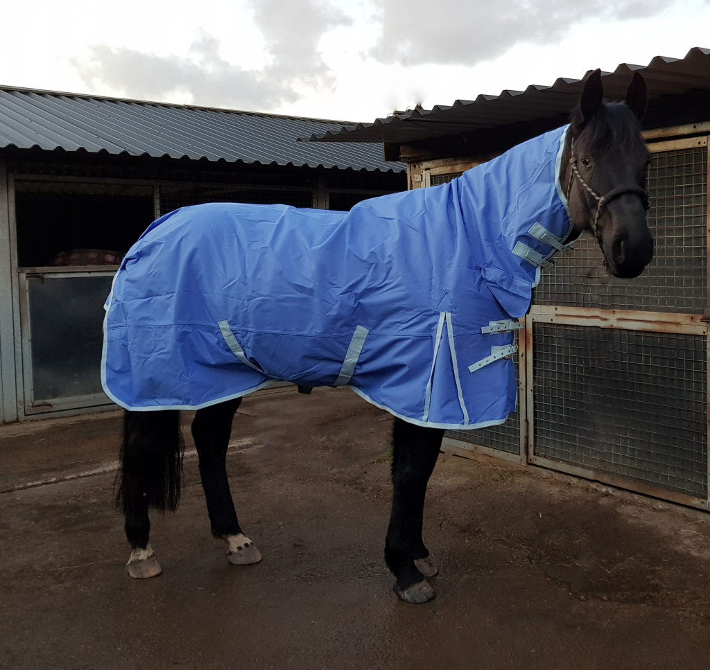 Rudy Wearing his Derby House Pro Lightweight Combo Turnout Rug
