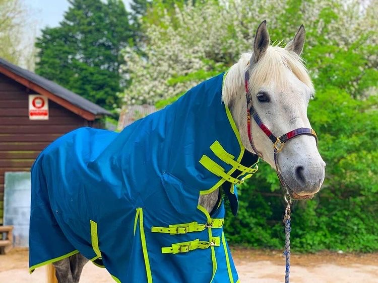 Tried And Tested - Derby House Evolution Recycled PFC Free Lightweight Combo Turnout Rug