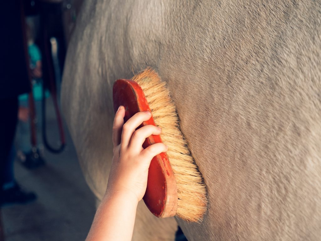 Horse Grooming Tips And Tricks