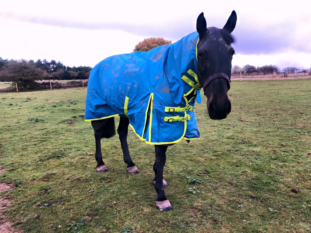 Tried and Tested - The Derby House Evolution Turnout Rug