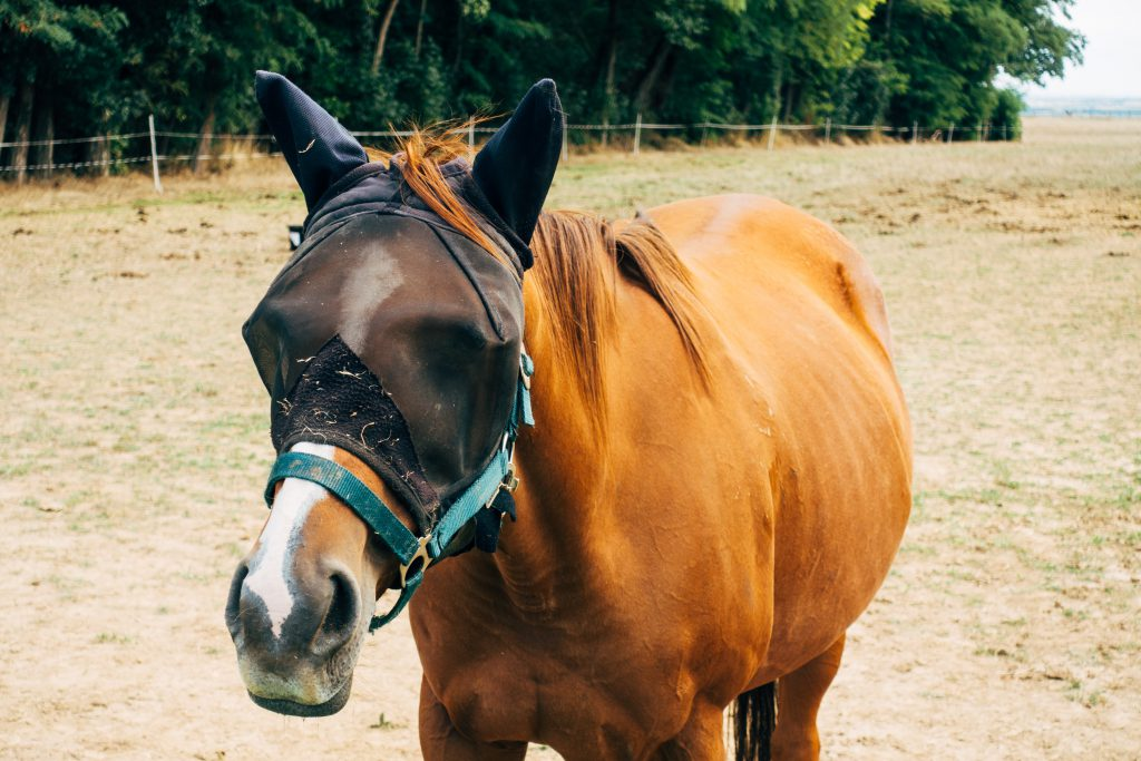 Summer Essentials Horse Riders Can't Live Without