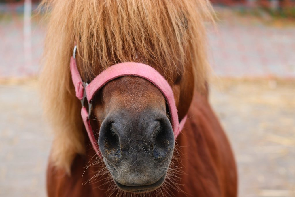 Fun (cheap) things to do with your pony this holiday.