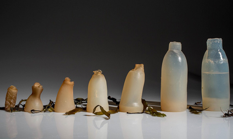 Amazing Biodegradable Algae Water Bottle!
