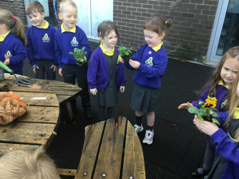 Mrs McMenamins P1 class enjoyed planting flowers and learning the 'p' sound.