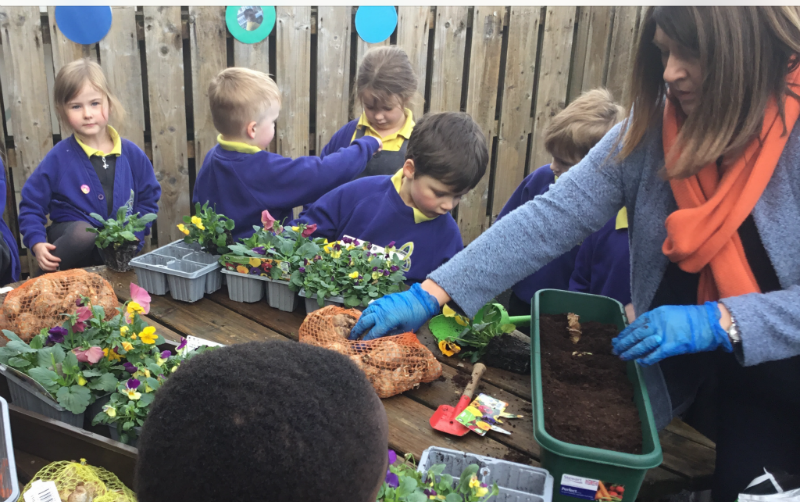 Planting flowers with Mrs McCann in P1