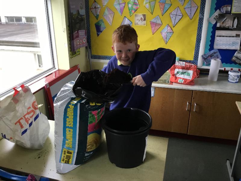 Planting potatoes in Mr Starrs P7 class.