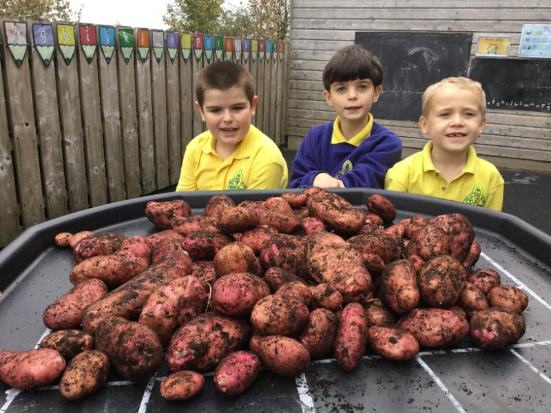 Garrett, Padraig and Nathan were very excited to harvest the potatoes that they have grown in the polytunnel.  Fantastic work boys!