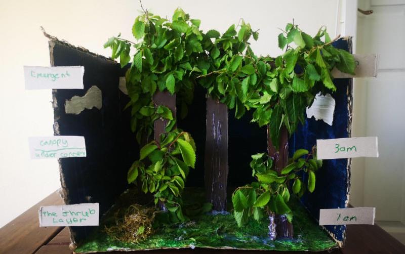 Oisin's rainforest project