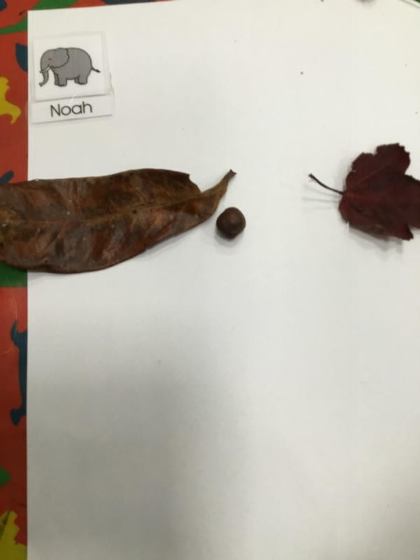 """""""I found a big leaf and a smaller one. The conker is nose for the butterfly."""""""