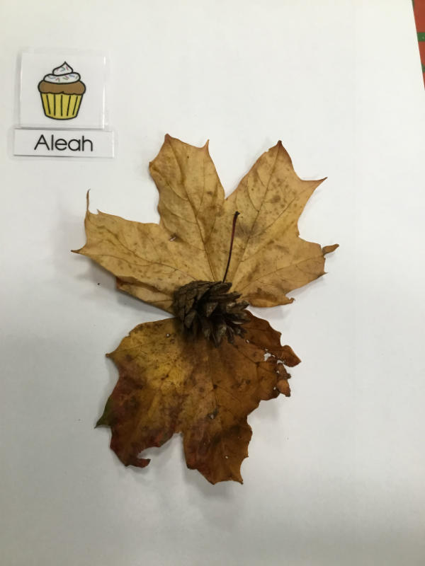 """""""A butterfly made of leaves and pine cone."""""""