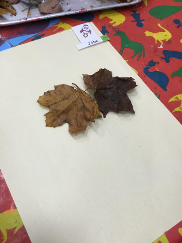"""""""A leaf butterfly. He flies everywhere and picks up a lot of cows!"""""""