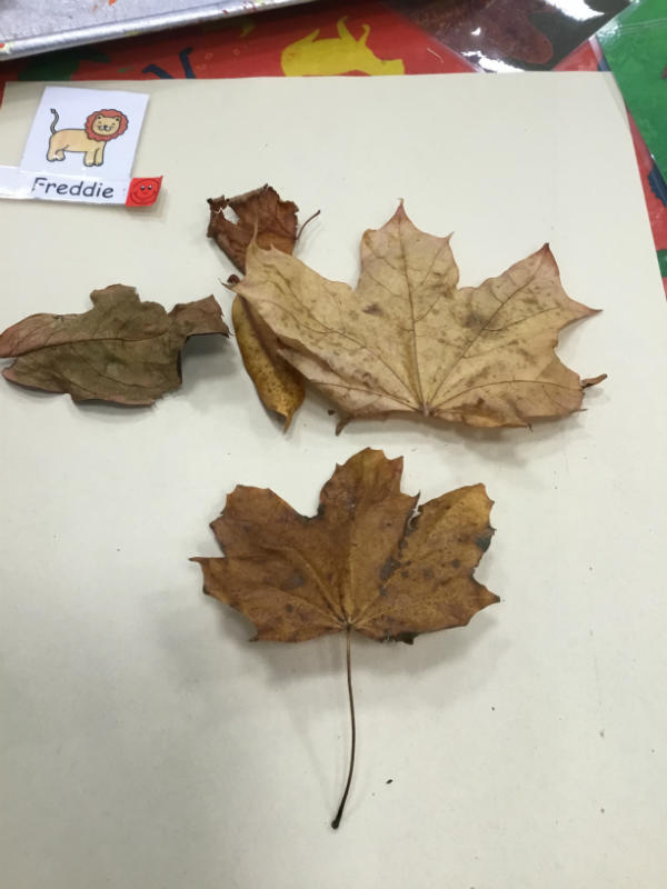 """""""a leaf butterfly. He flies all over."""""""