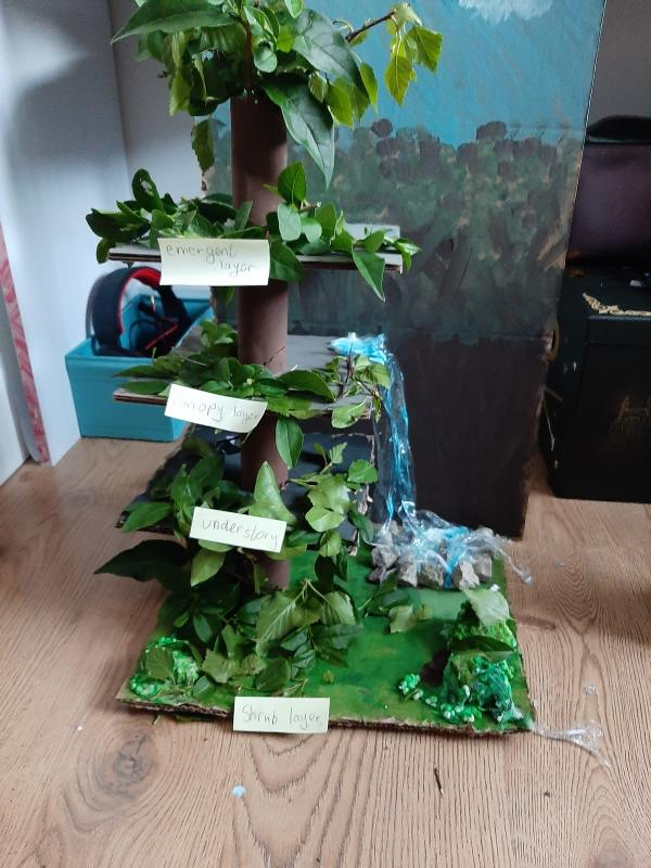 A rainforest model!