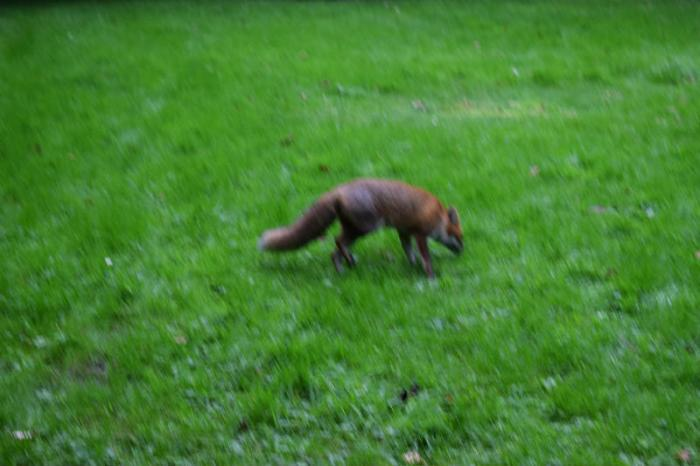 Have you ever been so close to a fox?