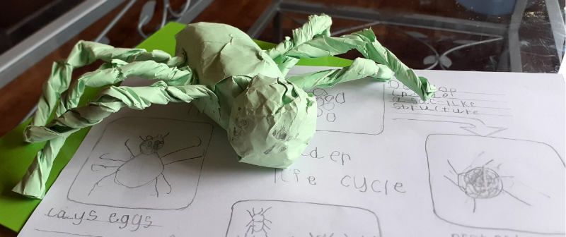 Denisas made an amazing lifecycle and junk art spider.