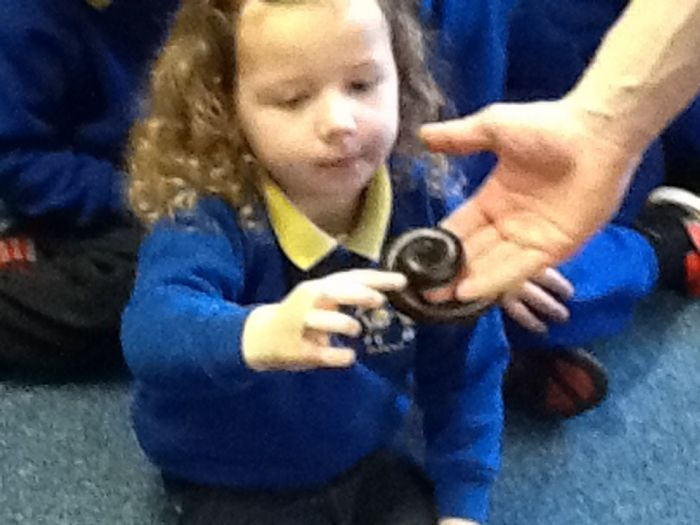 The giant millipede