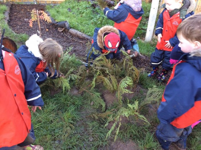 Planting conifer leaves to make a 'wee wee wood' for the fairies!