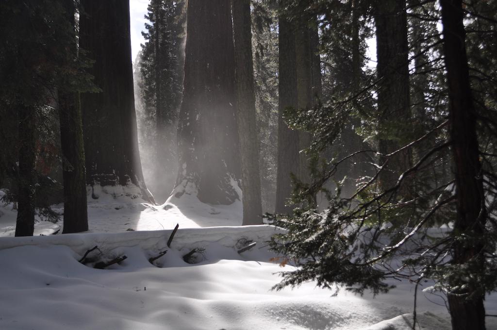 parque nacional de las secuoyas nevado