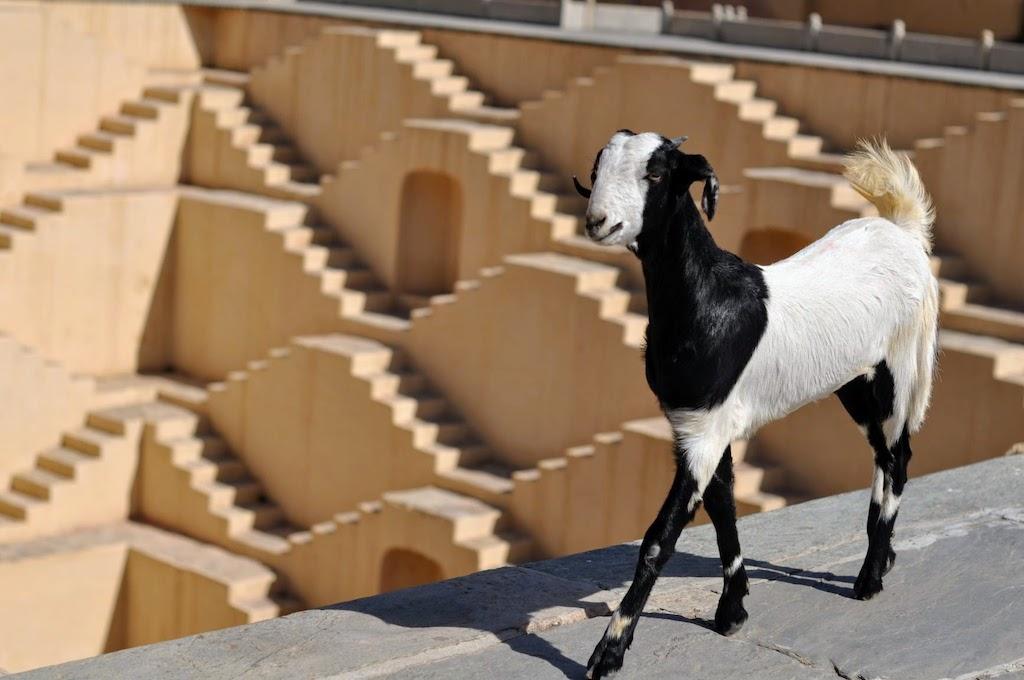 viajar a jaipur - la cabra del aljibe