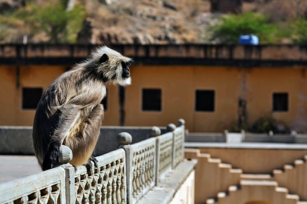 viajar a Jaipur - el aljibe de los monos