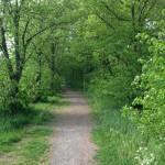 Mysig skogsväg bakom området