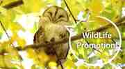 2017 WildLife Promotion