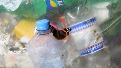 Sommerfugl på plastflasker