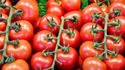 tomater grønnsaksdiske