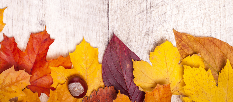 SmartNinja Herbstaktion
