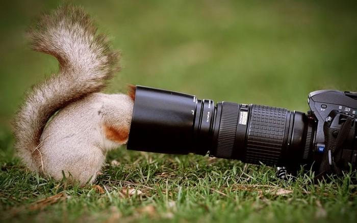 Créer un livre photo en ligne