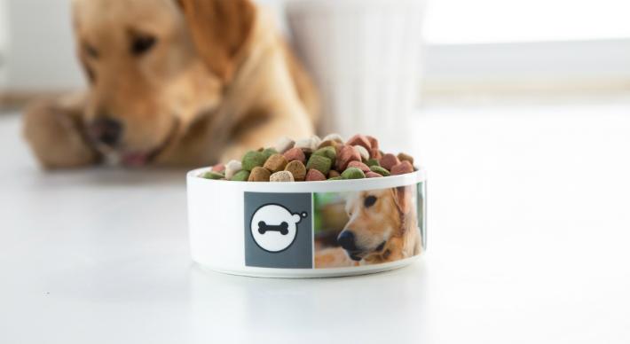 gamelle chien - accessoire pour chien ou chat