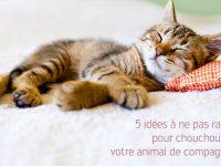 Chouchouter son animal de compagnie : 5 idées d'accessoires pour chien ou chat