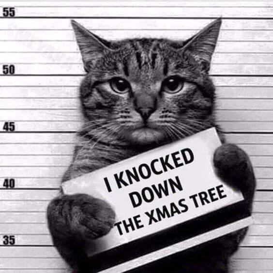 Photo de Noël