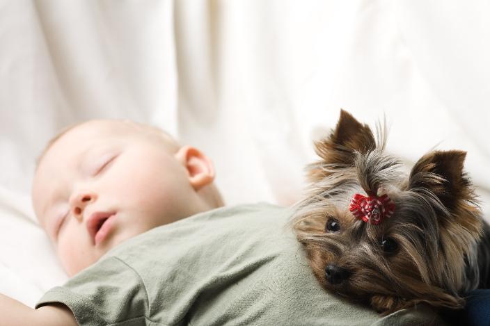 Photo d'un bébé endormi sur le dos. Un petit chien est couché à ses côté et pose sa tête sur le ventre de l'enfant.