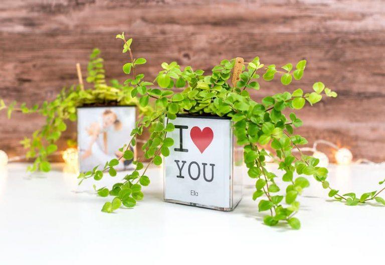 Pot à fleurs détourné DIY original succulentes
