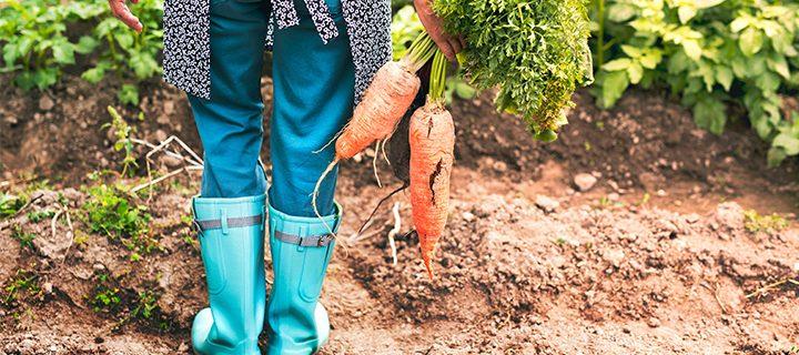Odlingstips – 6 superenkla sätt att snabbt få ordning på dina fröer, planteringar och din trädgård!