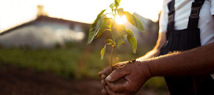 En fotobok = ett nytt träd på vår jord! Smartphoto ❤️ Vi-skogen