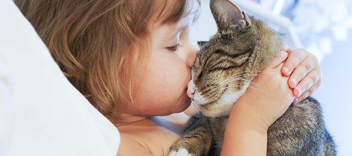 7 tips – så skämmer du bort ditt husdjur på International Pet Day 😻!