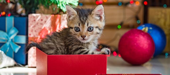 Pehmeän paketin paluu – parhaat ja pehmeimmät joululahjavinkit