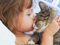 7 tips – sådan forkæler du dit kæledyr på International Pet Day 😻!