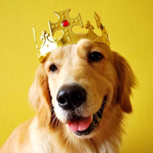 hund-krone