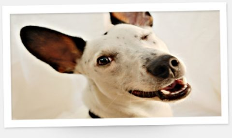 Die fünf schrägsten Hundefotos