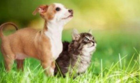 Dein Haustier im Rampenlicht am Welttierschutztag
