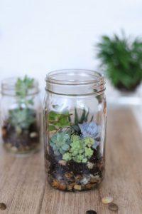 Einmachglas mit Sukkulenten