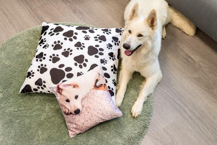 Quadratische Fotokissen mit Hund