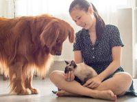 Tierische Geschenke zum Welttierschutztag