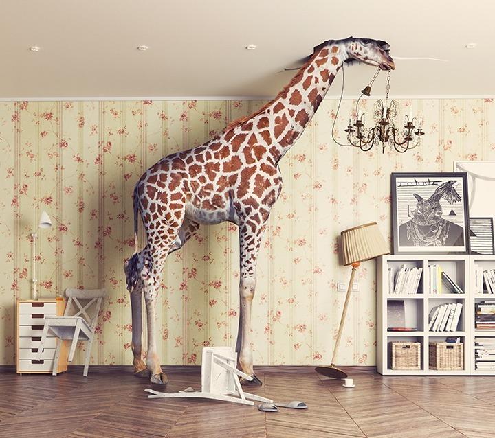Foto Giraffe im Zimmer